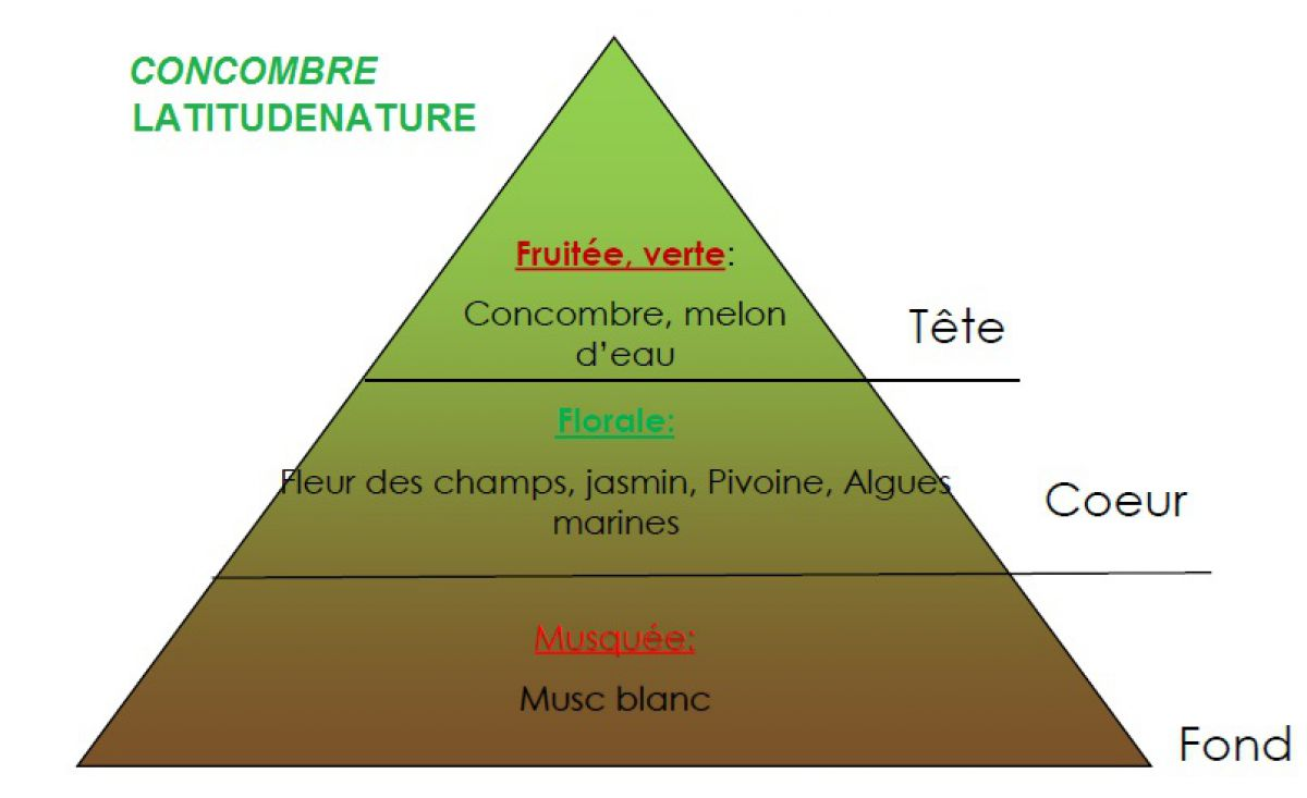pyramide olfactive parfum bougie concombre