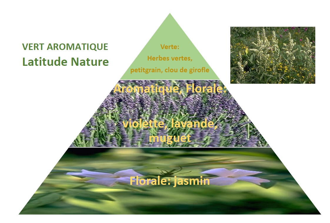 pyramide olfactive vert aromatique