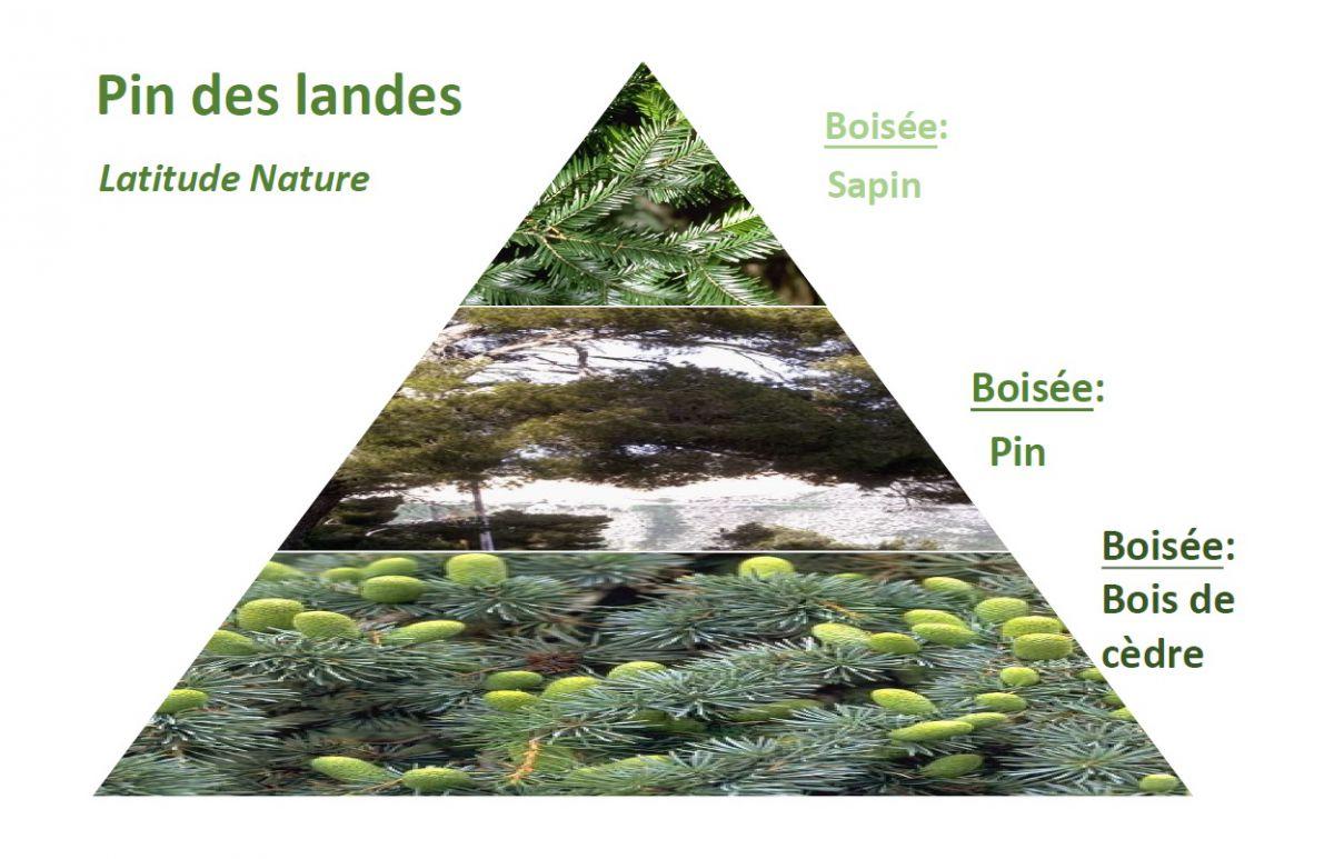 pyramide olfactive pin des landes